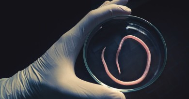 Parasitic Worms Intake By Women Can Help Boosting Fertility?