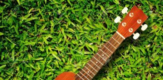 ukulele on green grass texture Stock Photo ukulele