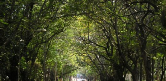 forest IIT MADRAS