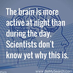 the-brain-is-more-active-at-night-than-during-the-day-human-body-facts-scientists-dont-know-yet-why-this-is-human-body-facts