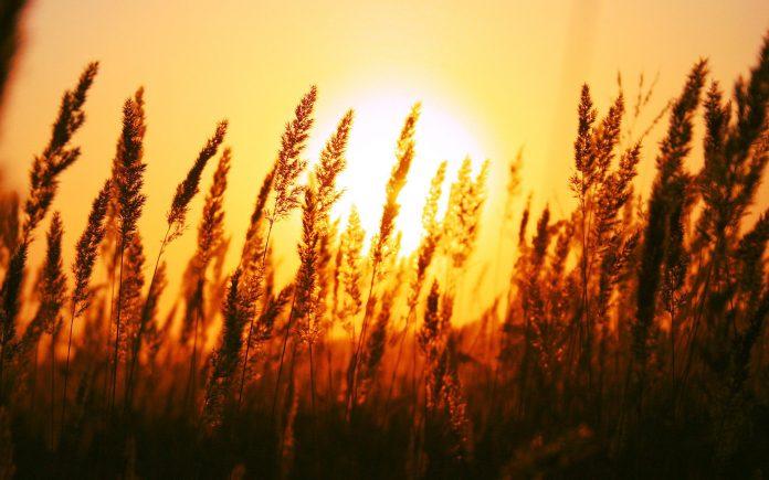 beautiful sun rise wide