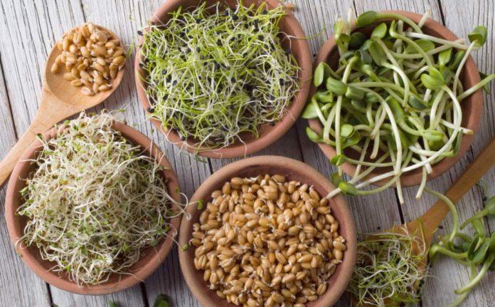 Varieties of sprouts