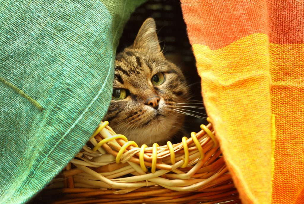 Cute cat watching from her hiding place